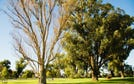 Lot 235, Indigo Bend, Wellard, WA 6170
