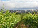 Kerewong Vineyard, 82 Branson Road & Lots 121 & 122 Main South Road, McLaren Vale, SA 5171