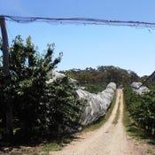 Kersbrook Cherry Farm, 1718 South Para Road, Kersbrook, SA 5231