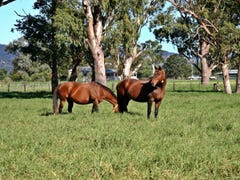 'Goanna Downs' New England Hwy, Scone, NSW 2337
