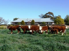 "574 Coolatai Road ""WYBALENA"", Inverell, NSW 2360"