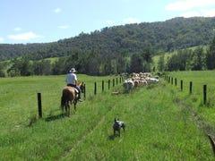 2469  Kangaroo Creek Road, Kangaroo Creek, NSW 2460