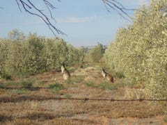 Lot 240 Olive Grove Road, Napperby, SA 5540