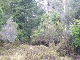 Lot 2 Cradle Mountain Road, Moina, Tas 7310