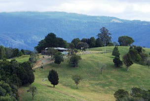 731 Maynards Plains Road, Dorrigo, NSW 2453