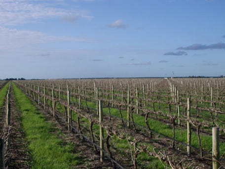 McKie Vineyard, Memorial Road, Coonawarra, SA 5263