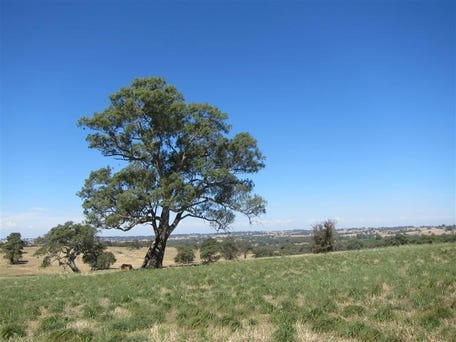 Lot 100 R Seeligers Rd, Flaxman Valley, SA 5235