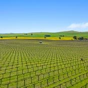 'Stone Bridge Wines' , & Associated Vineyards, Clare, SA 5453