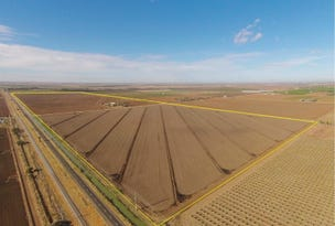 Farms 101B and 101C, Yoogali, NSW 2680