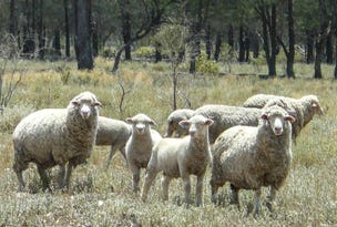 "'' Bogibel/Kareelah"", Collarenebri, NSW 2833"