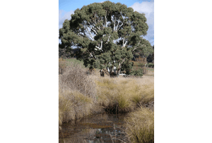 lot 87 Flacknell Creek road, Gunning, NSW 2581