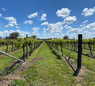 Sienna Vineyard Riddoch Highway, Penola, SA 5277