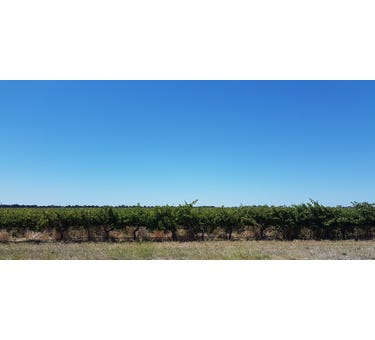Albert Vineyard & Gaffney Road Block, Sec 469 V&A Lane, Coonawarra, SA 5263