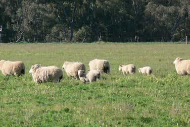 Greenethorpe NSW 2809 - Image 3