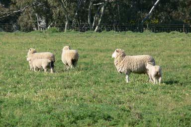 Greenethorpe NSW 2809 - Image 4