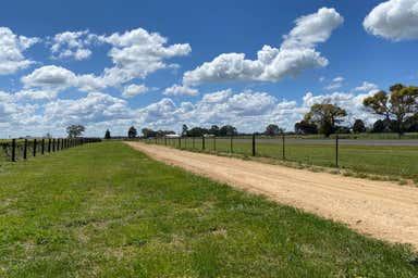 Sienna Vineyard Riddoch Highway Penola SA 5277 - Image 4