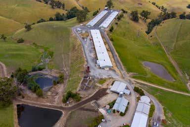 Mountain View Farm, 641 Mountain View–McDonalds Track Mountain View VIC 3988 - Image 3