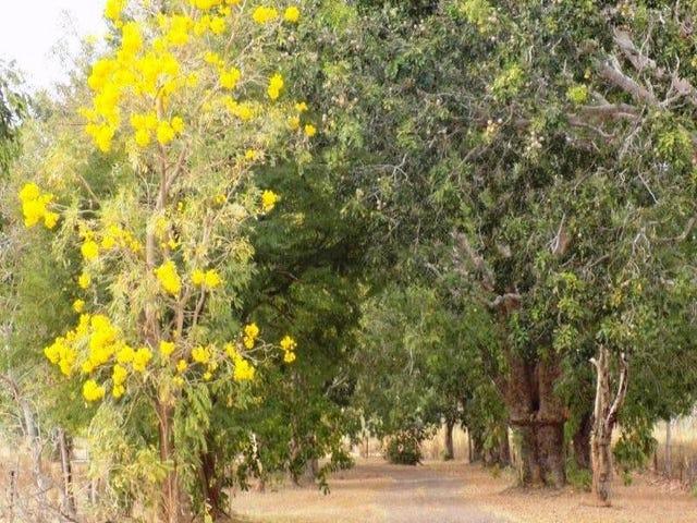 lot 13 Whitstone Road, Acacia Hills, NT 0822