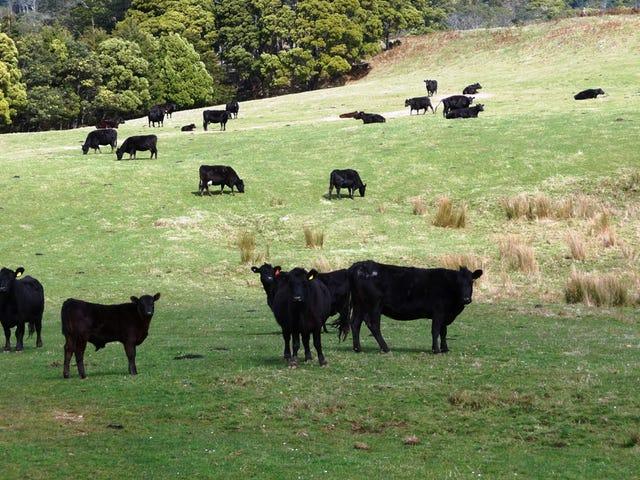 29371 Tasman Highway, Weldborough, Tas 7264