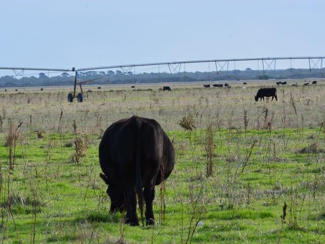 742 Bowaka Rd, Reedy Creek, SA 5275