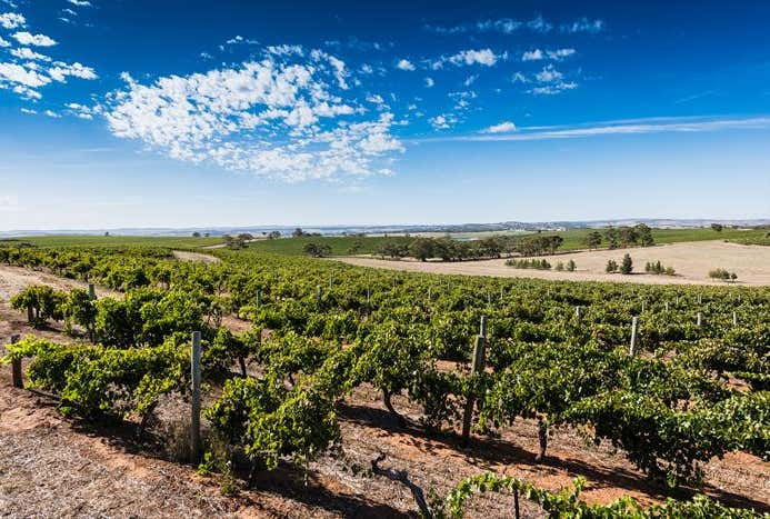 Schobers Vineyard, Tank and Main North Roads, Leasingham, SA 5452