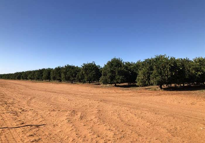 582 Government Road Renmark West SA 5341 - Image 2