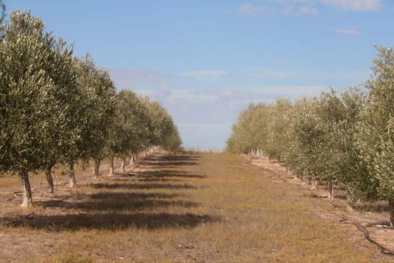 5 Chandos Road Pinnaroo SA 5304 - Image 1