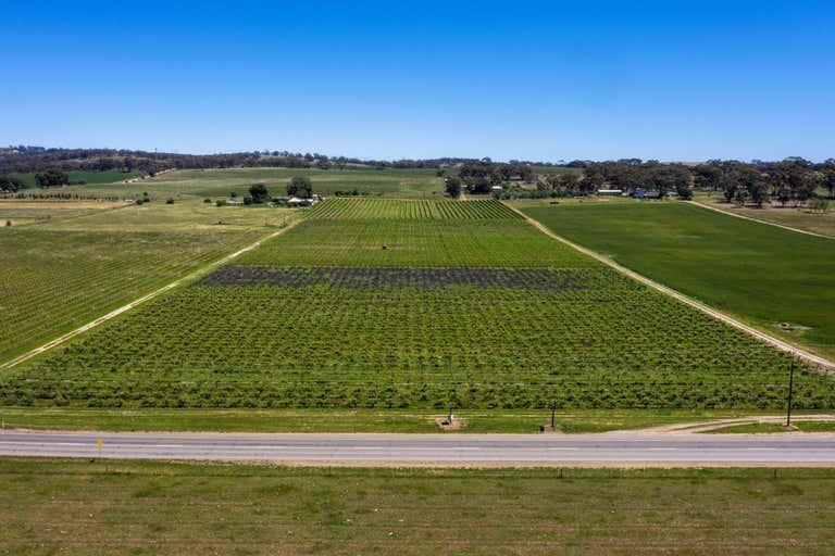 Stanley Flat & Noble Road Vineyards, Section 454 Horrocks Highway Stanley Flat SA 5453 - Image 4