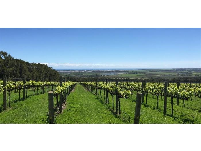 Sellicks Hill Vineyard, Lot 327 Rogers Road, Sellicks Hill, SA 5174